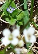 Close purple flower behind white ones