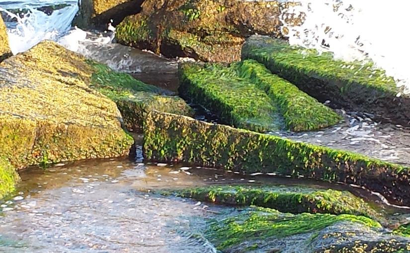 Mossy Ocean Rocks