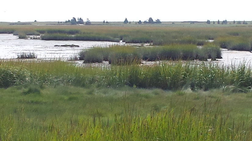 Ellisville Marsh