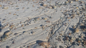 Rocky Beach Perspective