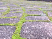 Mossy Brick Path