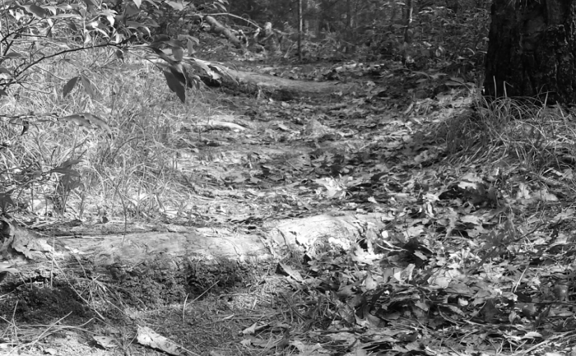 Woodland Steps – Cee's Black and White PhotoChallenge