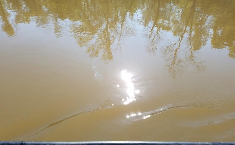 Muddy Reflections