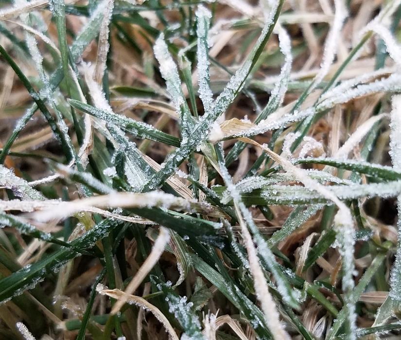 Frosty Grass Blades